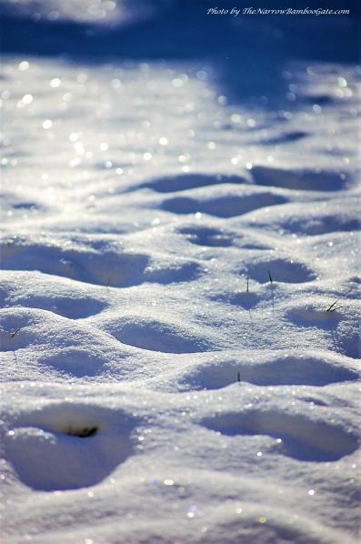 snow 1 4